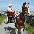 Two-Wheeled Pony Cart