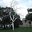 Saint Louis Art Museum with Silver Tree Sculpture