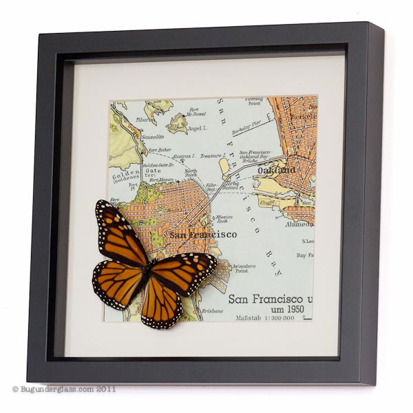 Framed-san-francisco-map-butterfly