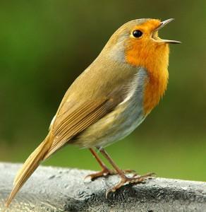 Songbird-292x300