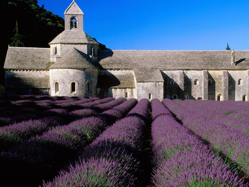 Lavender Field_ Abbey of Senanque_ Near Gordes_ Provence_ France